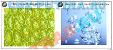 Гдз клетки листа под микроскопом и пузырьки воздуха под микроскопом